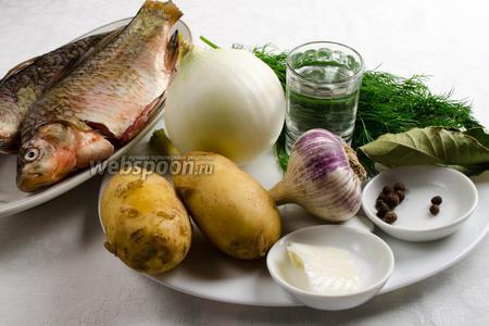 Чтобы приготовить уху, нужно взять свежих карасей, лук, укроп, картофель, лавровый лист, душистый перец, воду, водку. Для заправки нужно взять чеснок, укроп, сало, соль.
