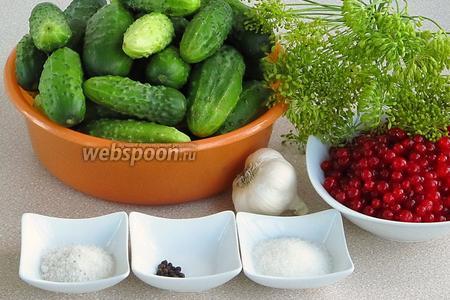 Для приготовления заготовки нужно взять свежие мелкие огурчики, чеснок, чёрный перец горошком, зелёные розетки укропа с семенами, воду, красную смородину, сахар и соль. Расчёт ингредиентов дан на банку ёмкостью 3 л.