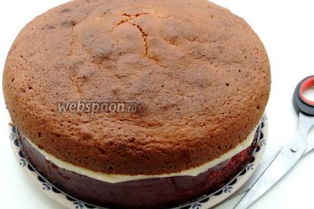 Кладём бисквит шоколадом на марципан. Подравниваем  ножницами марципан по окружности торта.