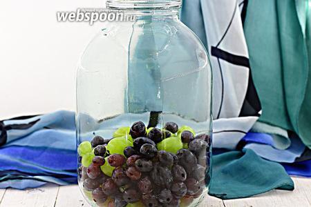 Предварительно простерилизуйте банку и крышку. Промойте виноград, отделите ягодки от грозди. Добавьте в стерильную банку. Заполните 1/3 часть банки. Отдельно вскипятите воду. Аккуратно налейте в банку с виноградом. Закройте стерильной крышкой. Оставьте на 5 минут.
