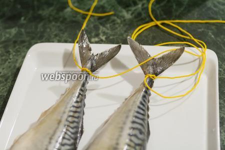 Рыбку хочется съесть прямо сейчас, но мы-то запланировали сделать провесную. Поэтому обвязываем их хвосты шпагатом.