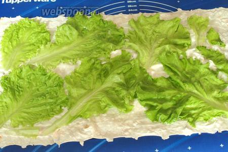 Листья салата промыть и обсушить, разложить их сверху сыра.