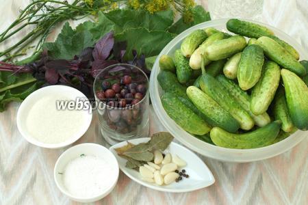 Для заготовки нам понадобятся свежие огурцы, ягоды йошты, укроп, чеснок, лавровый лист, перец чёрный горошком, сахар, соль, листочки фиолетового базилика, листья смородины и листья хрена. Расчёт специй дан на 3 банки по 1 л. Огурцы лучше взять среднего размера или корнишоны, поместить их в холодную воду на 3 часа. Если огурцы свежесорванные, то замачивать их не нужно.