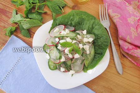 Салат из огурцов с редисом и мятой