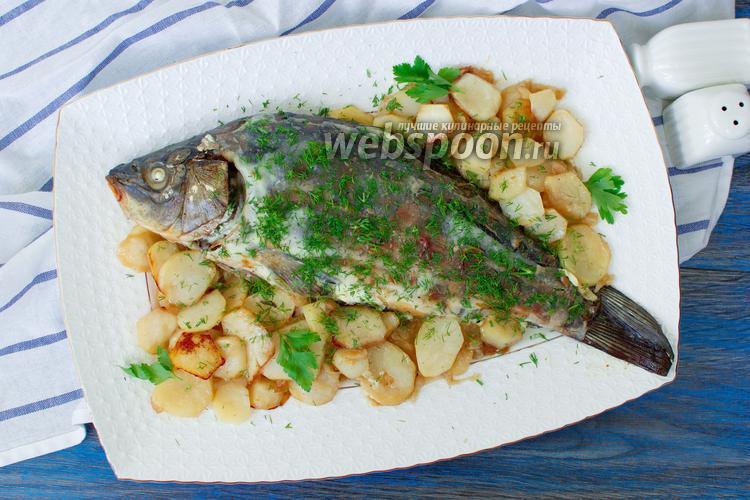 Фото Карп запечённый с луком, картофелем и сметаной