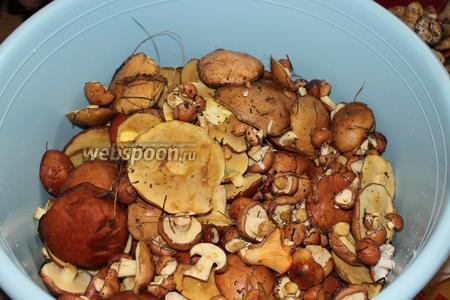 Для маринада взять свежие грибы.