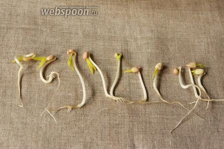 Вот так они будут выглядеть, пустят корень и появятся листочки.