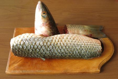 Разделываем рыбу, чистим, отрезаем голову и хвост, срезаем плавники — набор для ухи готов.