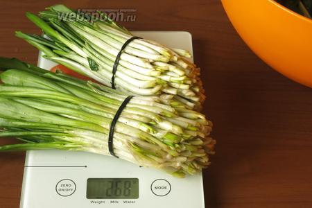 Готовим зелень. В рецептах часто указывается 1-2 пучка. Решила взвесить, сколько это. 2 пучка черемши, размером с кулак, весят 268 г. Промываем тщательно черемшу и шпинат (40 г), режем.