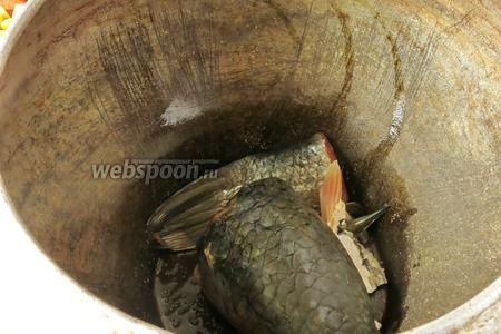 Рыбу (500 г пеленгаса) промываем и укладываем на дно чугунка (кастрюли, горшка).