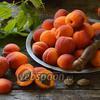 Фото совета Как заморозить абрикосы