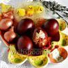 Фото совета Как красить яйца в луковой шелухе