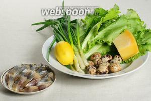 Для салата возьмём — сельдь, перепелиные яйца, пармезан, листья салата, зелёный лук и специи.