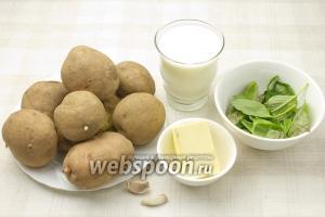 Для приготовления этого блюда возьмите: картофель, масло сливочное, молоко, свежий зелёный базилик, чеснок и соль.