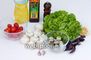 Для приготволения салата нам понадобится зелёный листовой салат, шампиньоны, помидоры черри, перепелиные яйца, куриное яйцо, базилик, чеснок, лимон, чёрный молотый перец, соль, оливковое и рафинированное подсолнечное масло.