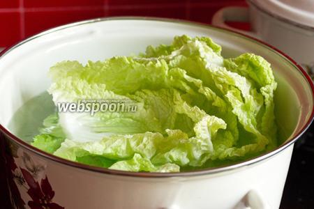 Срезаем небольшую часть толстых уплотнений у основания листов и отвариваем их в большой кастрюле в кипящей воде около минуты. Листы должны стать мягкими и податливыми. Вынимаем листья и даём им остыть.