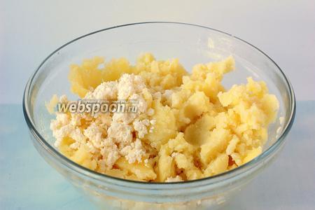 Картофель отварить в подсоленной воде. Воду слить, а в горячий картофель добавить творог и хорошо размять.
