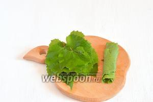 Сложить листья в стопочки по 5-7 штук и свернуть их трубочкой.