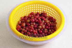 Утром ягоды выложить на дуршлаг, отделив настой.