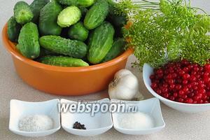 Для приготовления заготовки нужно взять свежие мелкие огурчики, чеснок, чёрный перец горошком, зелёные розетки укропа с семенами, воду, красную смородину, сахар и соль. Расчёт ингредиентов дан на банку ёмкостью 3 литра.