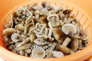 Когда грибы сварятся (через 15-20 минут), откинуть их на дуршлаг, промыть холодной водой.