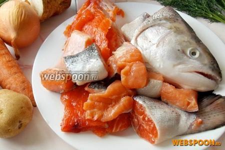 Для приготовления ухи по-фински понадобится любая красная рыба (у меня сёмга и форель). Голова, хребты, хвосты и кусочки филе. А также картофель, морковь, репчатый лук, корень сельдерея и свежий укроп.