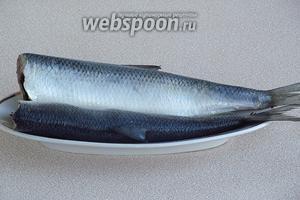 Просолившуюся рыбу обсушить. При подаче к столу нарезать сельдь кусочками, обсыпать кольцами репчатого лука и полить подсолнечным маслом.