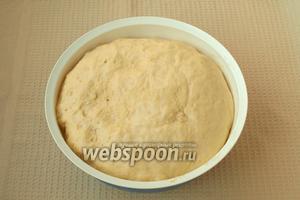 Оставить тесто накрытым в тёплом месте до увеличения в объёме в 2-3 раза.