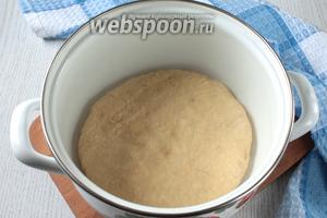 Когда опара поднимется, добавить размягчённое масло, сахар и яйцо, хорошо перемешать. Частями вмешать муку.