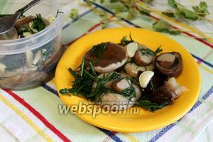 Белые грибы малосольные