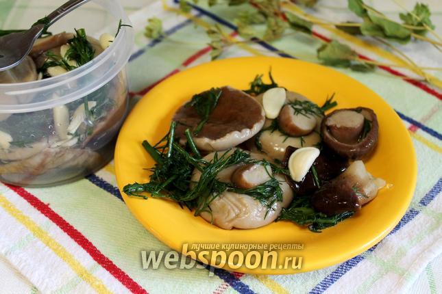 Фото Белые грибы малосольные