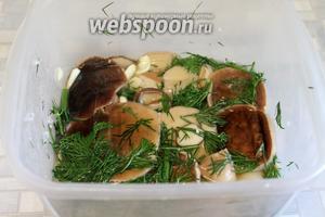 На следующий день (если готовили вечером) — грибы готовы. Можно попробовать на соль, а потом переложить в баночку и охладить в холодильнике. И сразу — на стол!