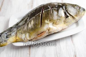 Карпа очистить, срезать плавники, хвост, удалить жабры, внутренности, вымыть. По спинке рыбы сделать надрезы под углом 45°.