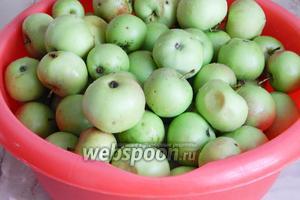 Для начала хорошенько вымоем яблоки. У меня недозрелые, кисло-сладкие, всё те же, что я использовала для сока.