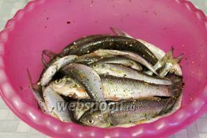 Хорошо перемешать, встряхнув миску, дать несколько минут (3-5) рыбе постоять в этом маринаде.