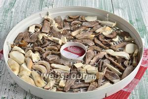 Разложить грибы на поддоны электрической сушки для овощей.