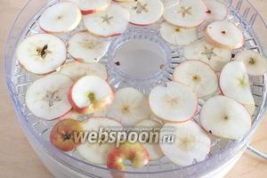 Разложите яблочные дольки в нижние камеры сушилки, там температура всегда выше.