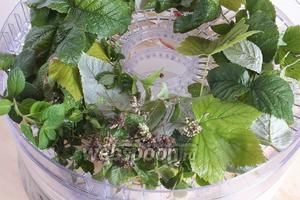 В верхние камеры сушилки плотненько разложите вымытые травы и листья. Поставьте таймер на 12 часов при температуре 50-55°С. Если ваша сушилка без таймера, придётся ориентироваться на ощупь, примерно через 10 часов посмотрите и определите на сколько ещё времени оставить сушиться яблоки и травы.