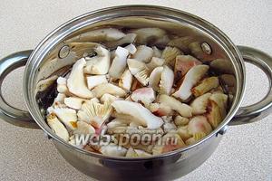 Залить сыроежки холодной водой и поварить в течение 20 минут.