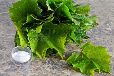 Для заготовки виноградных листьев для долмы вам понадобится соль и виноградные листья. Отлично подходит сорт Кудрик.