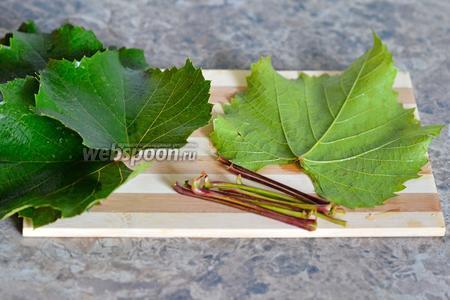 Листья необходимо сначала подготовить, убрать стебли и промыть под проточной водой.