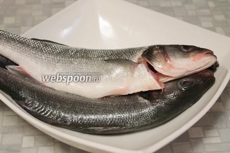 Рыбу очистить и выпотрошить, удаляя жабры. Кстати, свежесть сибаса определяют по жабрам: они должны быть бордового или тёмно-бордового цвета, не розовые или серые.