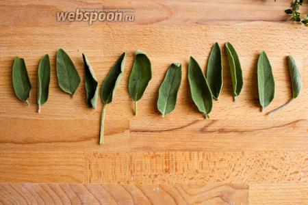 Оборвите самые крупные листики шалфея.