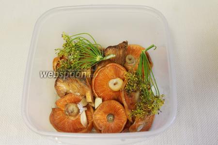 Поместить в пластиковую ванночку или эмалированную миску, пересыпать листьями и зонтиками укропа, нарезанными дольками чеснока.
