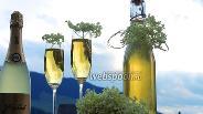 Фото рецепта Сироп из соцветий бузины чёрной