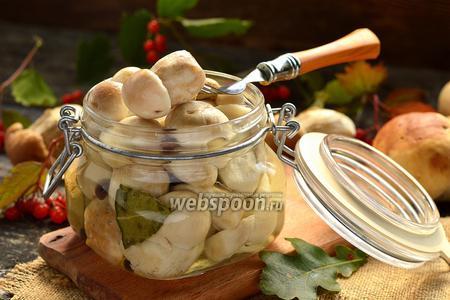 Белые маринованные грибы