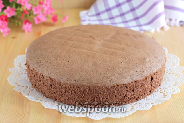 Фото Польский шоколадный бисквит
