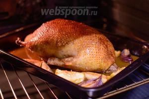 Поставьте утку в разогретую до 200°С духовку на 20 минут, затем убавьте температуру до 170°С и запекайте ещё примерно 1 час 10 минут. Периодически поливайте утку образовавшимся жиром, чтобы была румяная корочка. Готовность проверьте проткнув самую толстую часть ножки, если сок будет прозрачный, то утка уже пропеклась и можно доставать её. А вообще лучше ориентироваться по своей духовке и степени зрелости утки, если утка молодая, то она быстро приготовится, а если попадётся старая, то, чтобы мясо не было жёстким, понадобится больше времени на её приготовление.