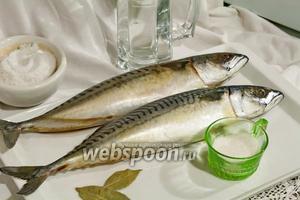 Выбираем крупную жирную скумбрию (не менее 500 г 1 рыбина).
