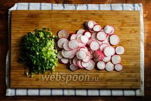 Редис помойте, обсушите и нарежьте на кружочки толщиной 1-2 мм. Зелёный лук мелко порубите.